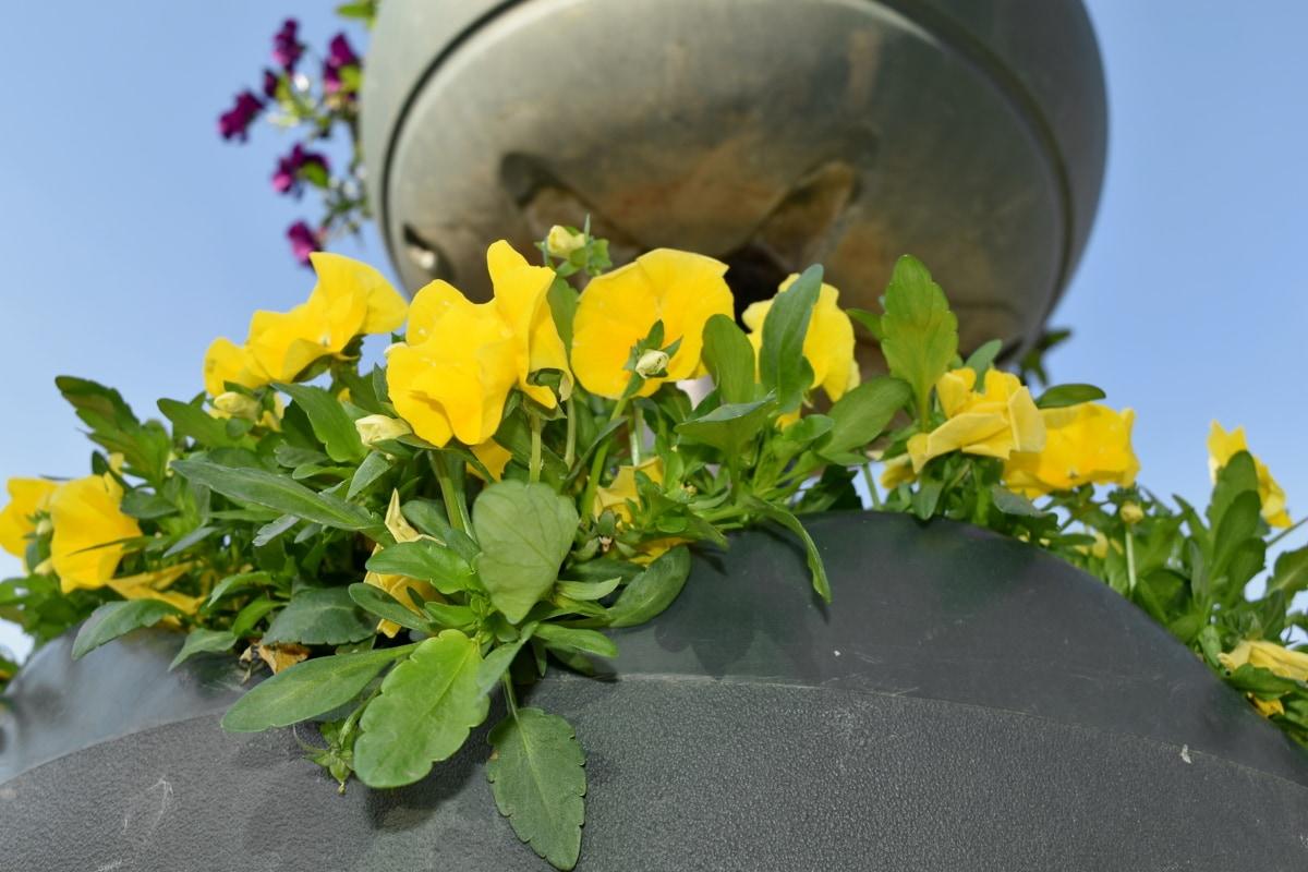 佩妮, spring, 静物, 中药, 植物, 花园, 黄色, 花