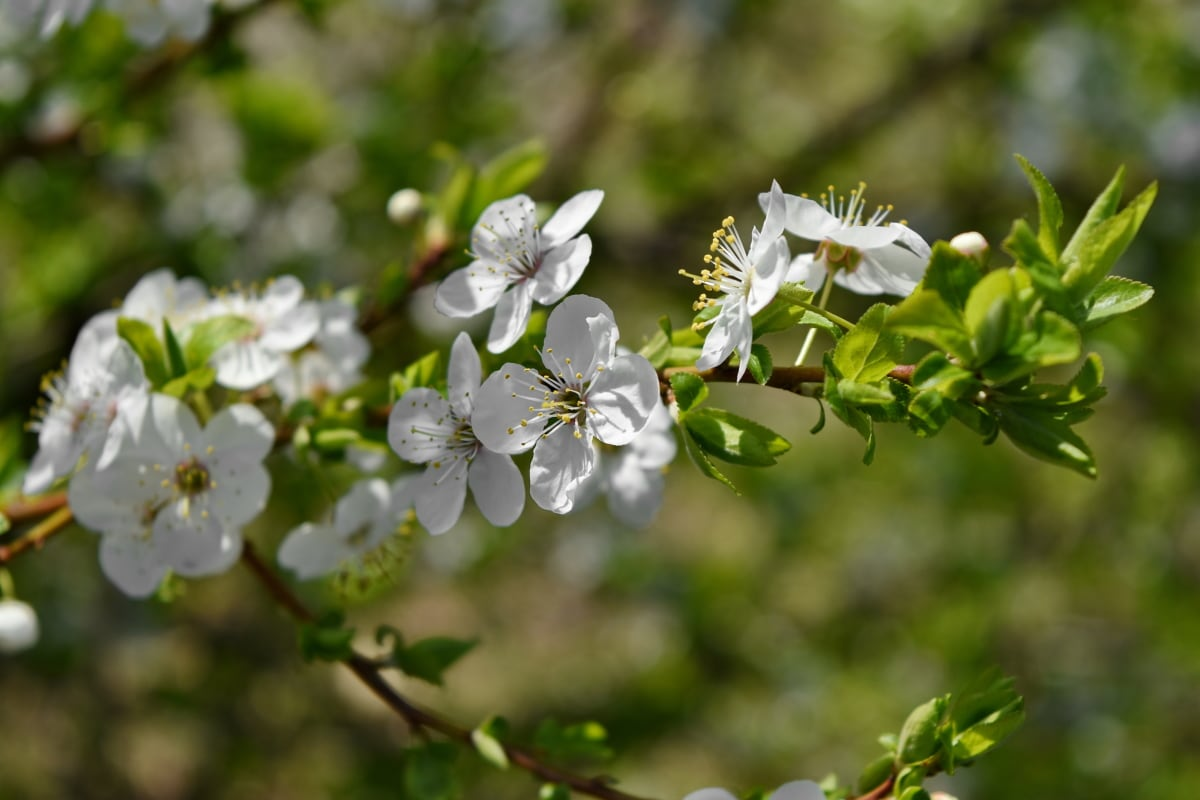 branch, shrub, flower, nature, plant, flora, blossom, leaf