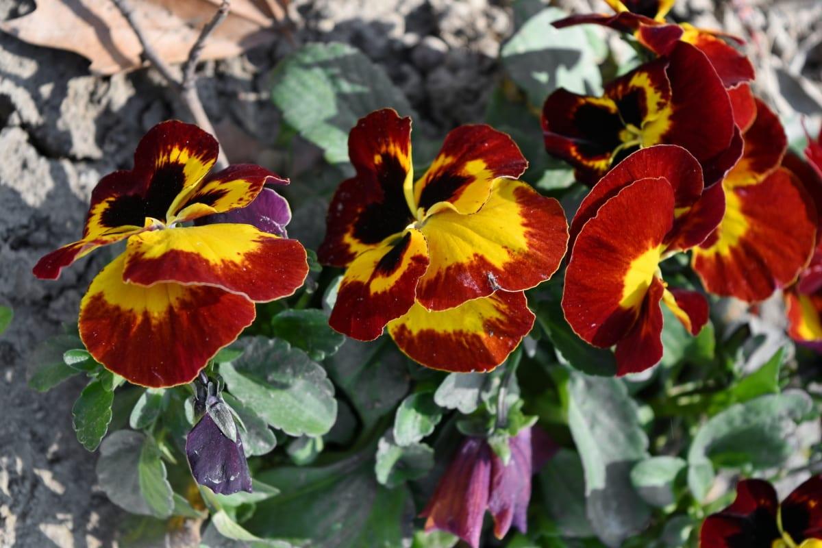 nature, flower, herb, garden, spring, flora, plant, leaf