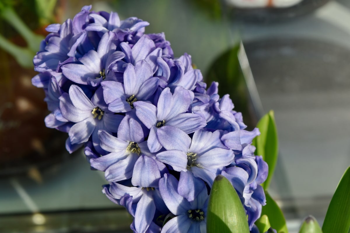 pianta, Flora, fiori, fiore, natura, erba, Giardino, foglia