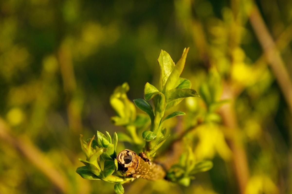 поле, рослина, завод, природа, квітка, Весна, жовтий, лист
