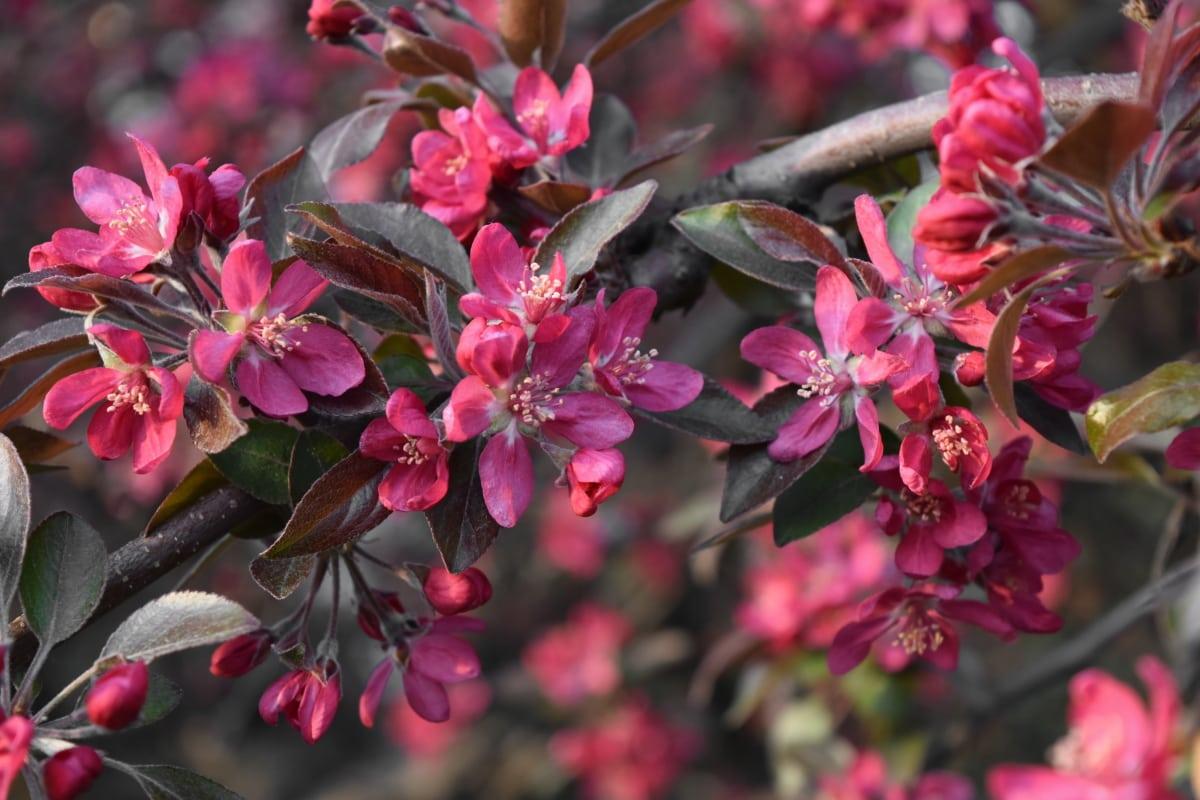 tempo di primavera, fiore, Flora, albero, Giardino, pianta, arbusto, natura