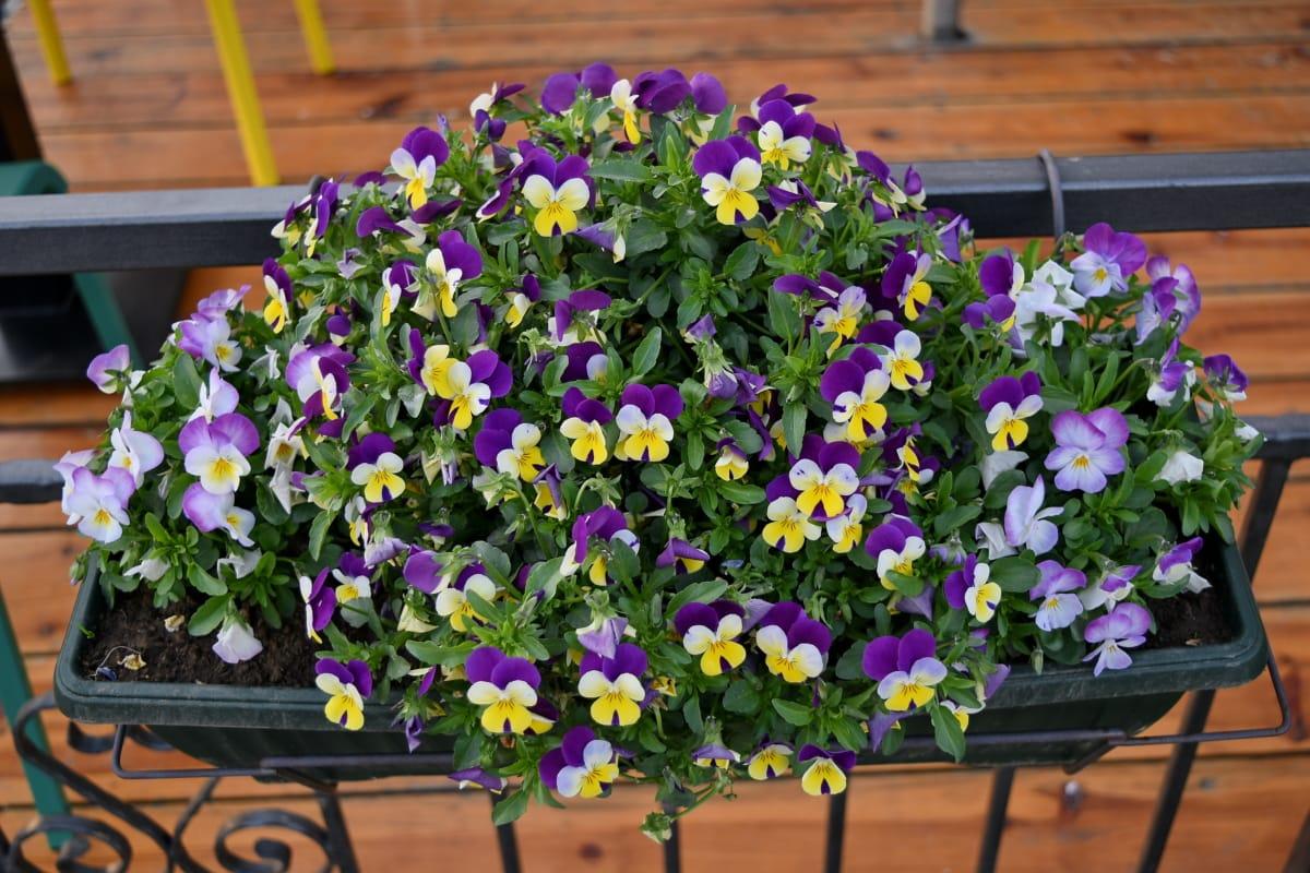 Darmowy Obraz żeliwo Szare Płot Doniczki Kwiat Kwiaty