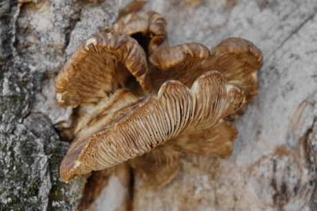 mushroom, vegetable, fungus, nature, wood, organism, upclose, tree