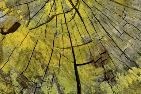 paint, yellow, tree, autumn, texture, pattern, nature, rough