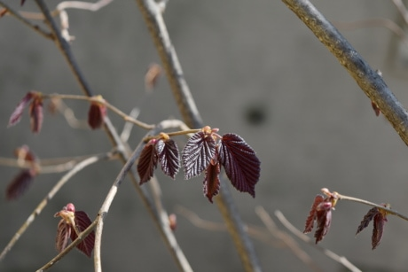 branches, spring time, branch, outdoors, nature, tree, leaf, flora