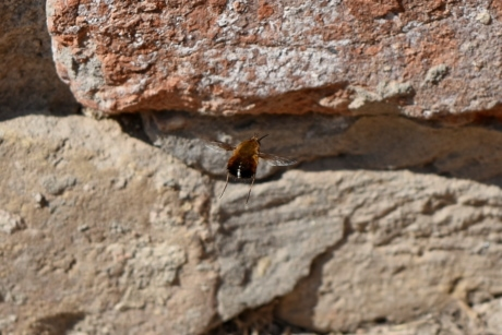 flying, arthropod, insect, invertebrate, rock, stone, nature, outdoors