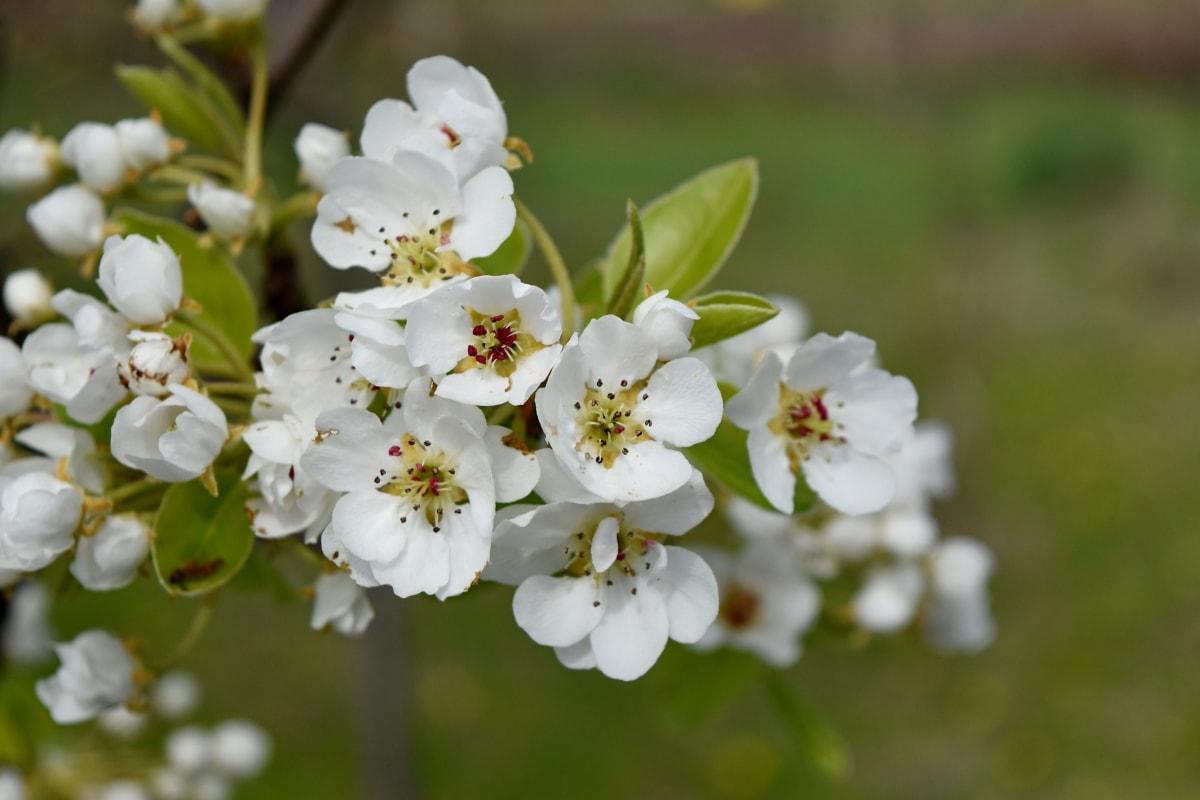 branch, details, flowering, orchard, spring time, leaf, nature, blossom