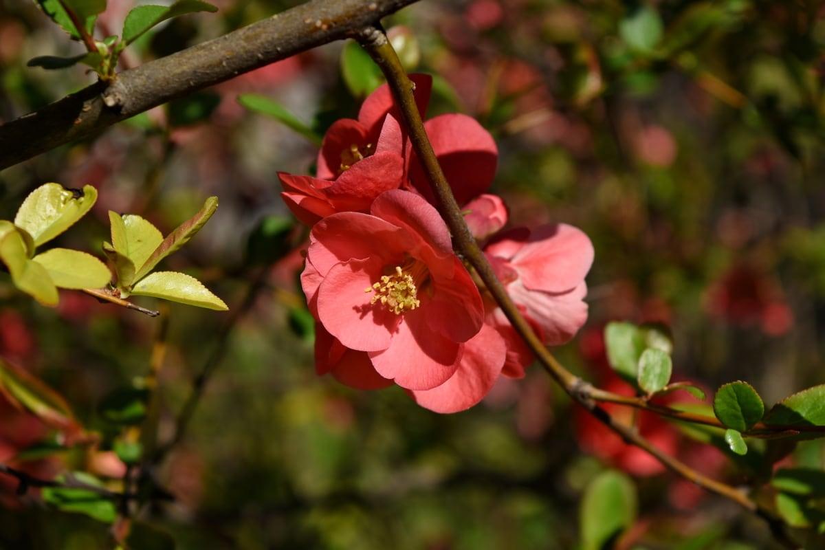 shrub, nature, flower, branch, plant, garden, tree, leaf