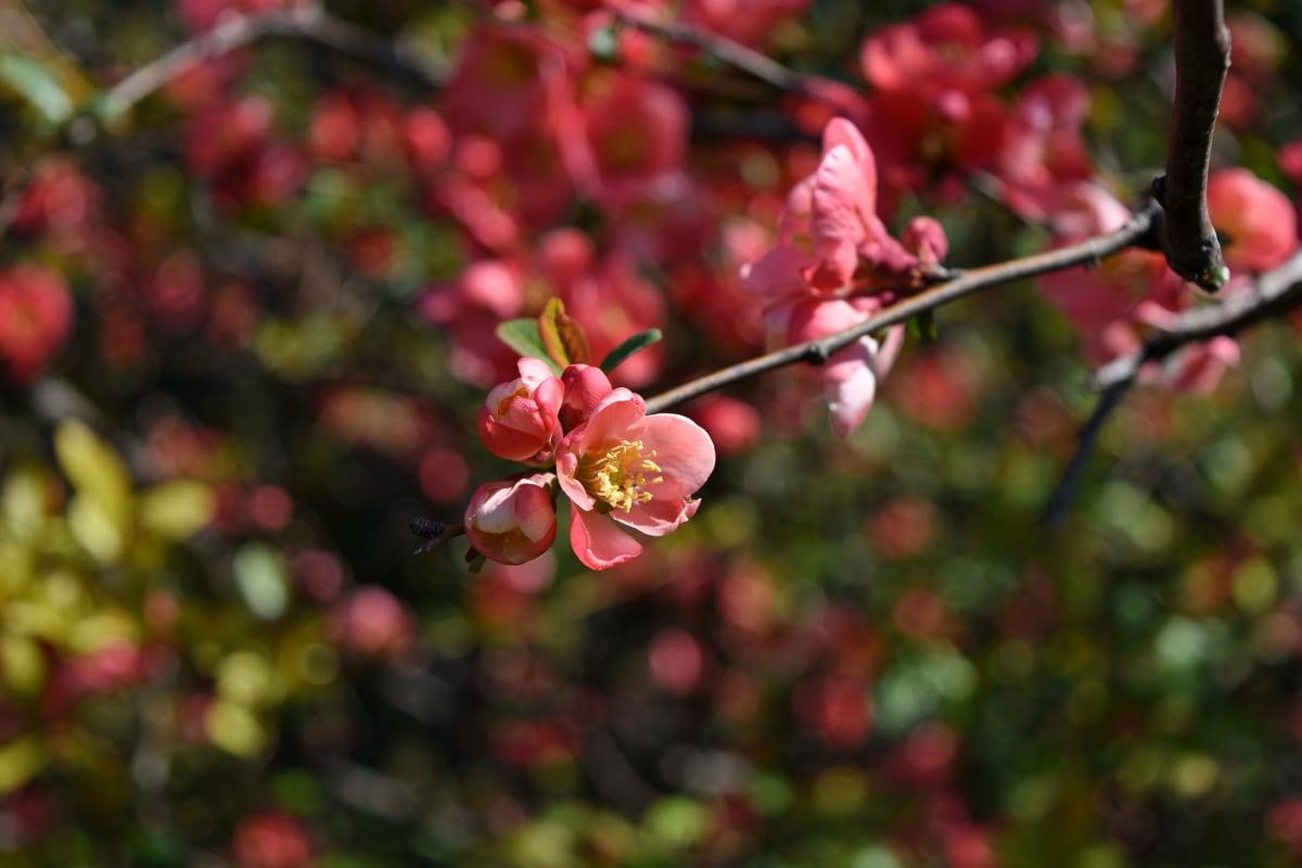plant, shrub, garden, flora, tree, branch, nature, season