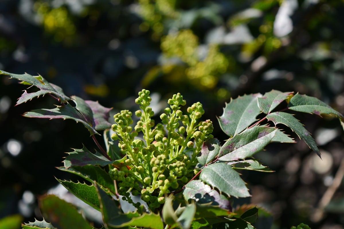naturen, blad, flora, träd, Anläggningen, buske, Utomhus, trädgård