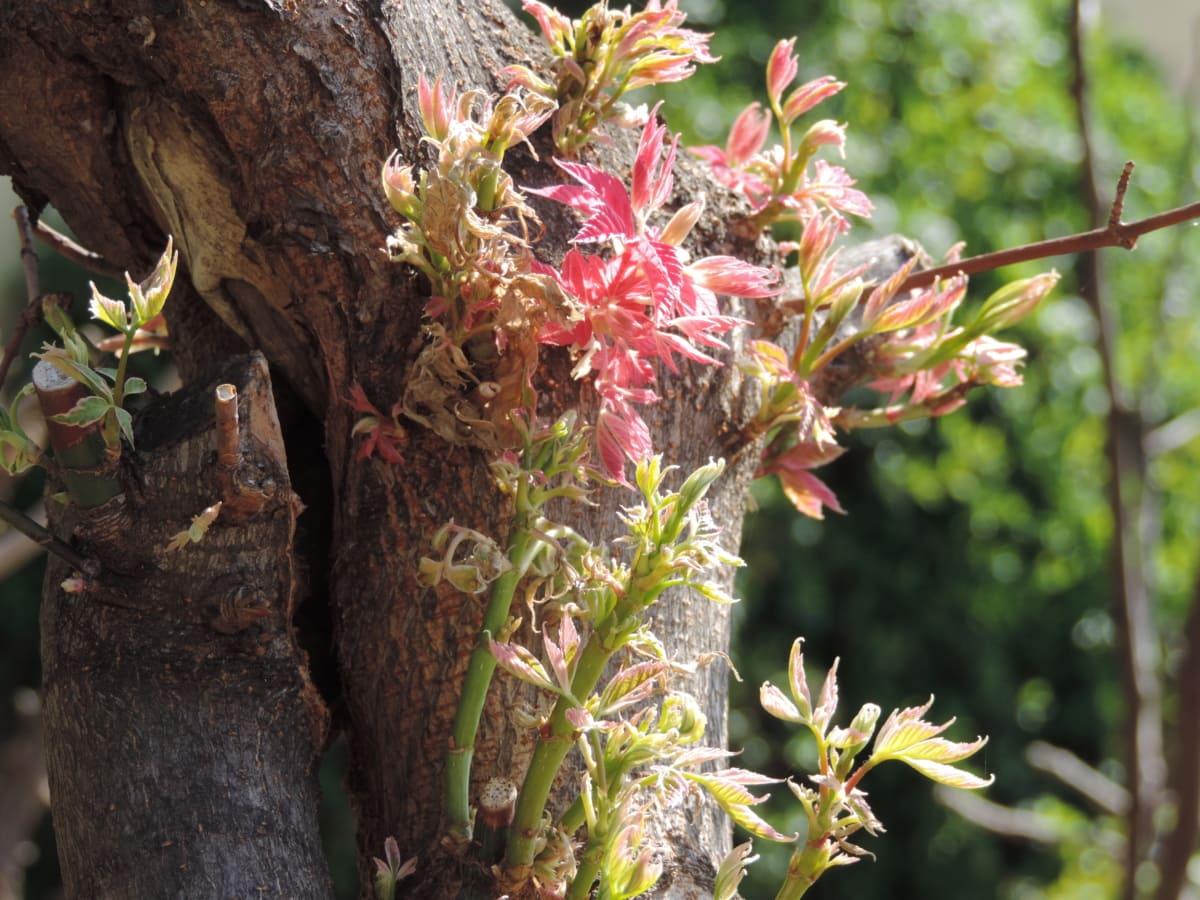 plant, shrub, leaf, nature, tree, flower, flora, wood