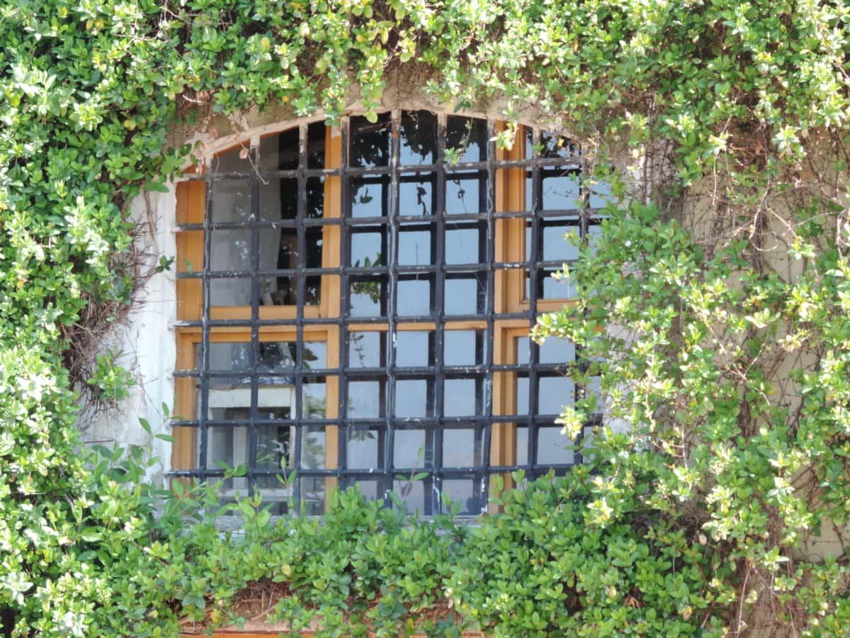 house, building, garden, window, leaf, flora, summer, architecture