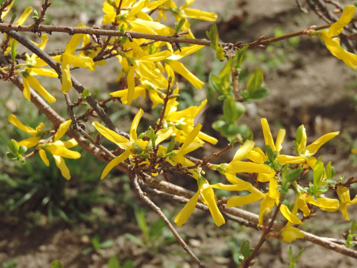 yellow, shrub, flora, tree, nature, plant, outdoors, leaf