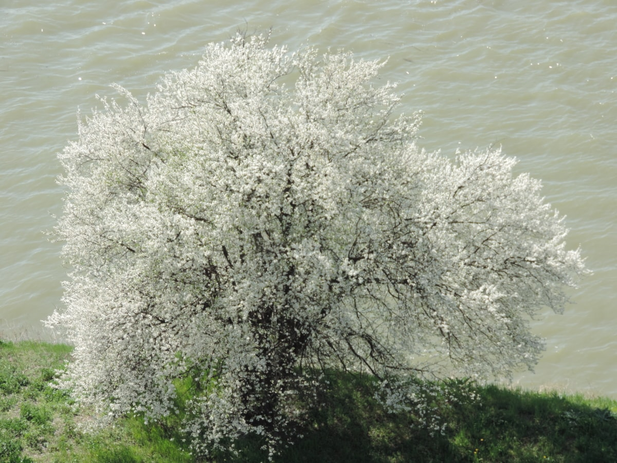 coast, river, riverbank, spring time, herb, tree, plant, season