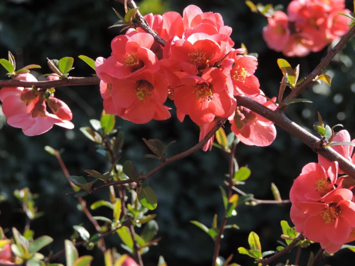 garden, shrub, flower, nature, plant, flora, leaf, tree