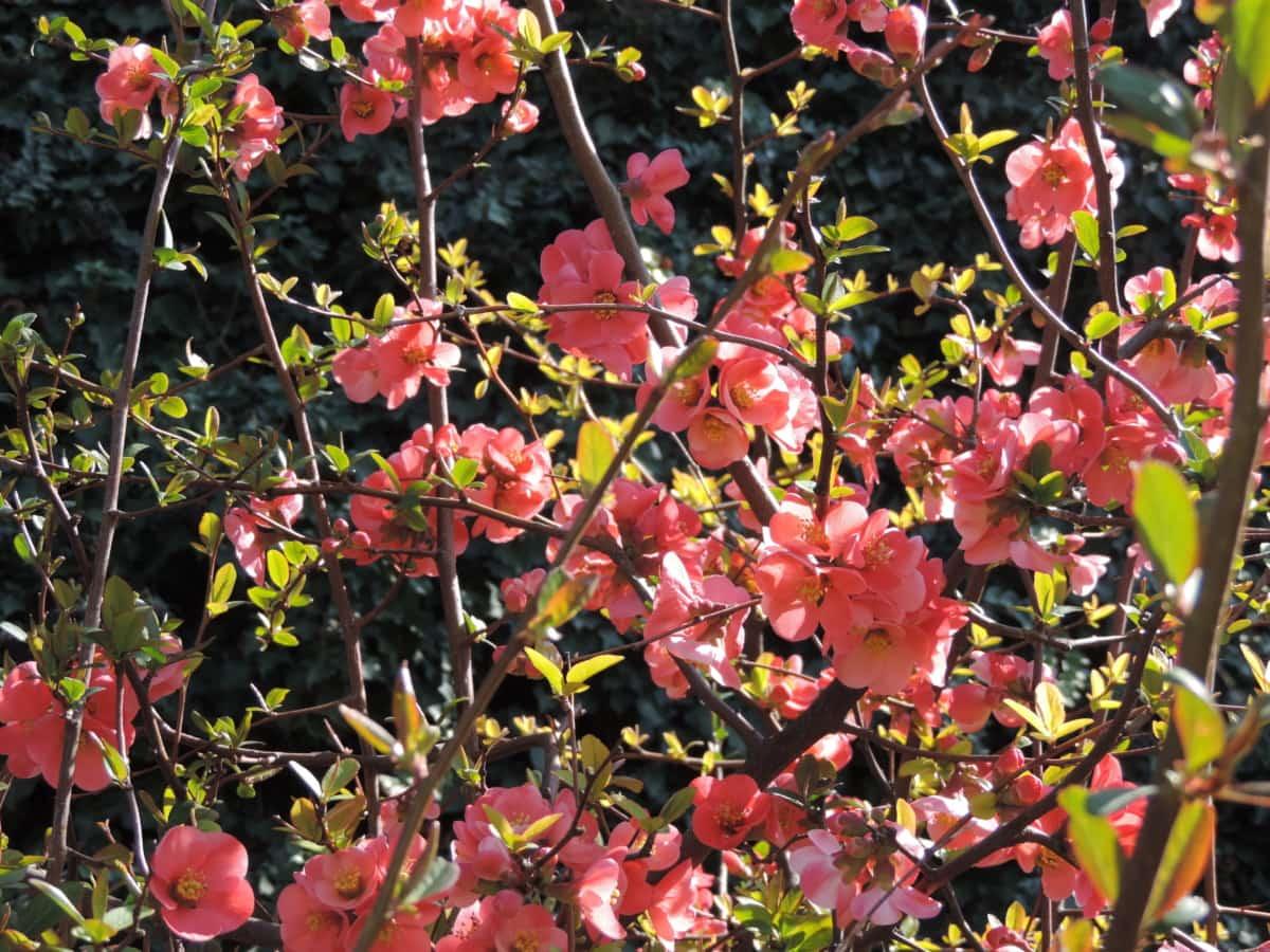 season, leaf, plant, garden, nature, flora, flower, shrub