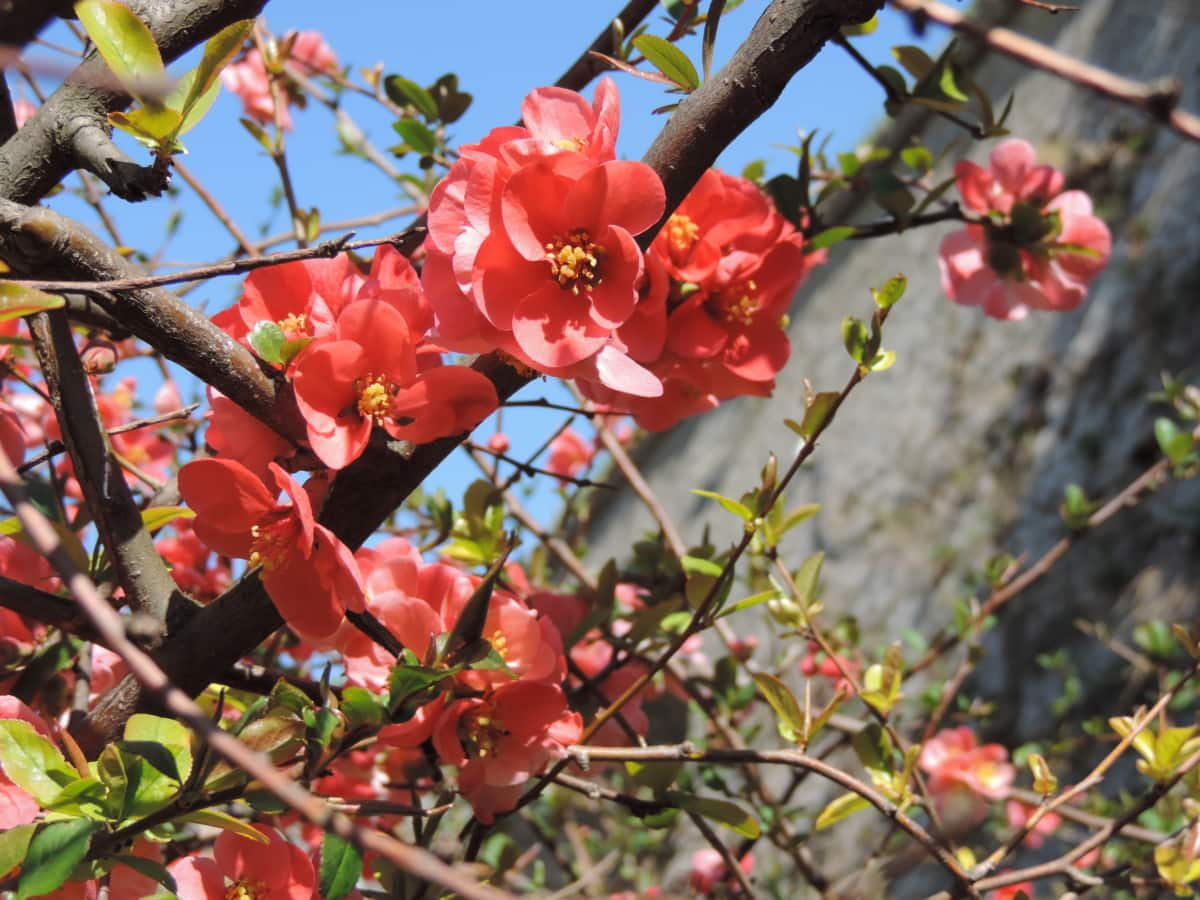 tree, nature, branch, shrub, flower, leaf, plant, garden