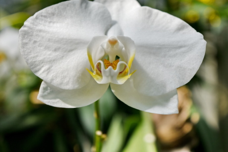 orchid, leaf, plant, flower, flowers, petal, nature, flora