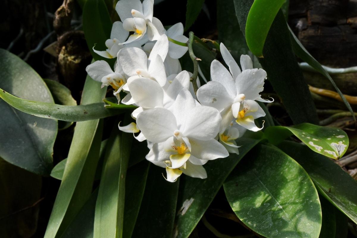 квітник, Садівництво, орхідея, цвітіння, квітка, завод, квіти, флора