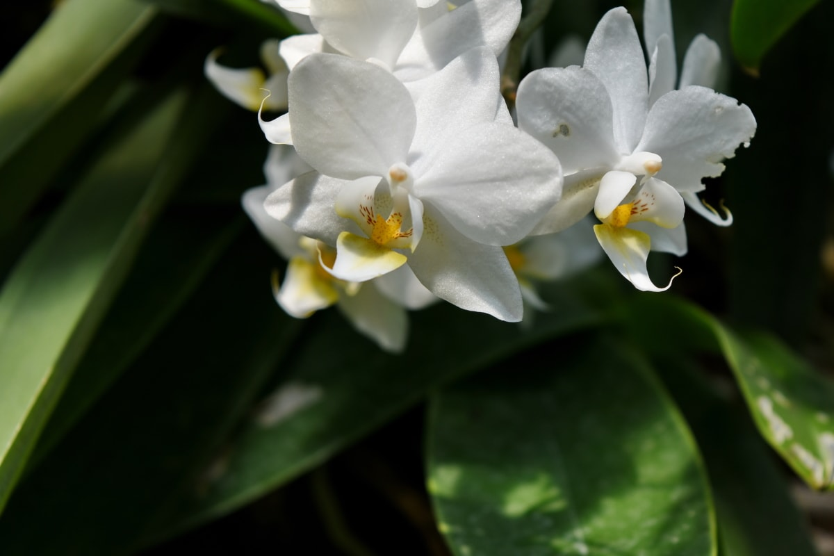 flora, flower, nature, flowers, plant, tropical, garden, petal
