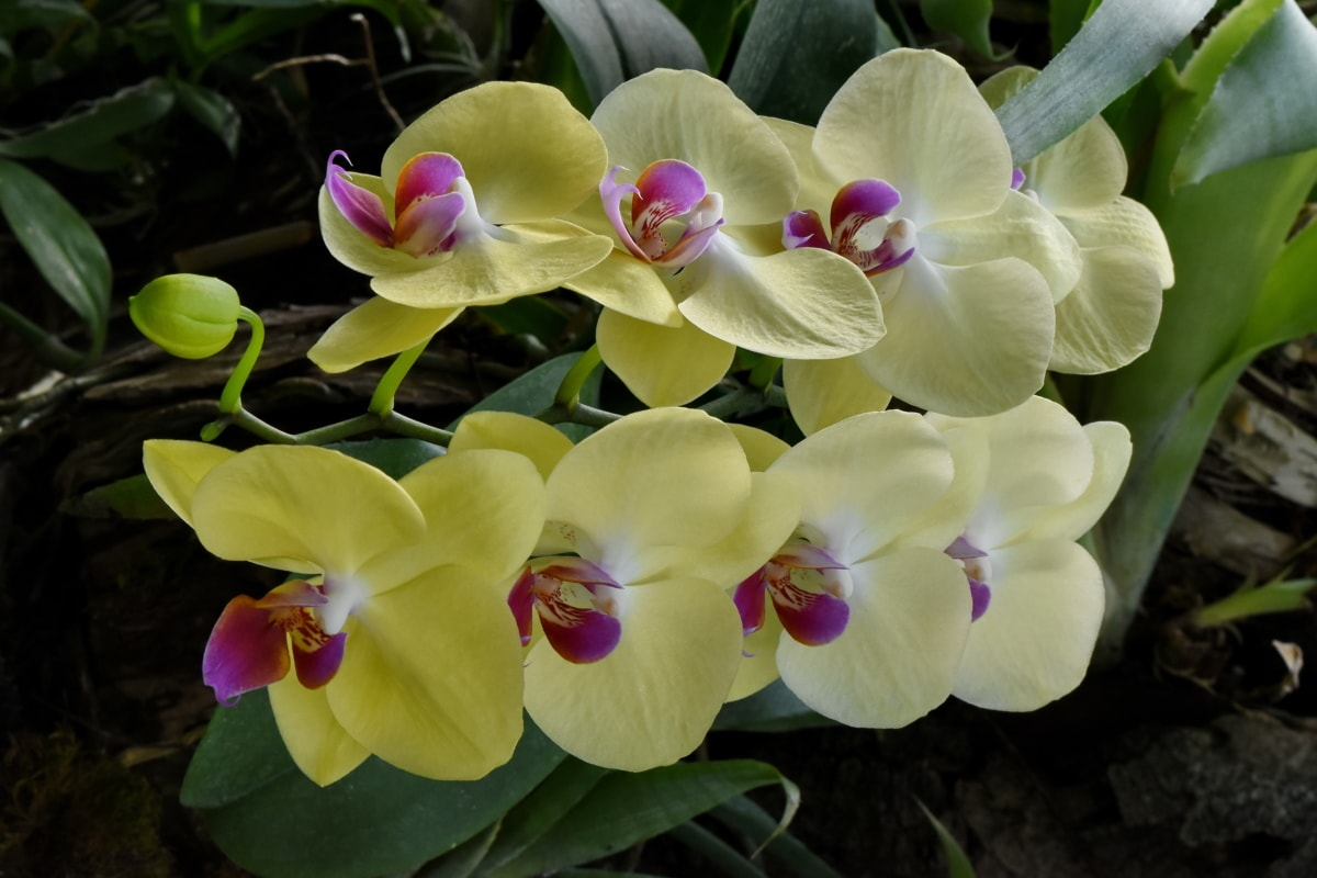 exotic, orchid, rain forest, tropical, wildlife, flora, blooming, petal