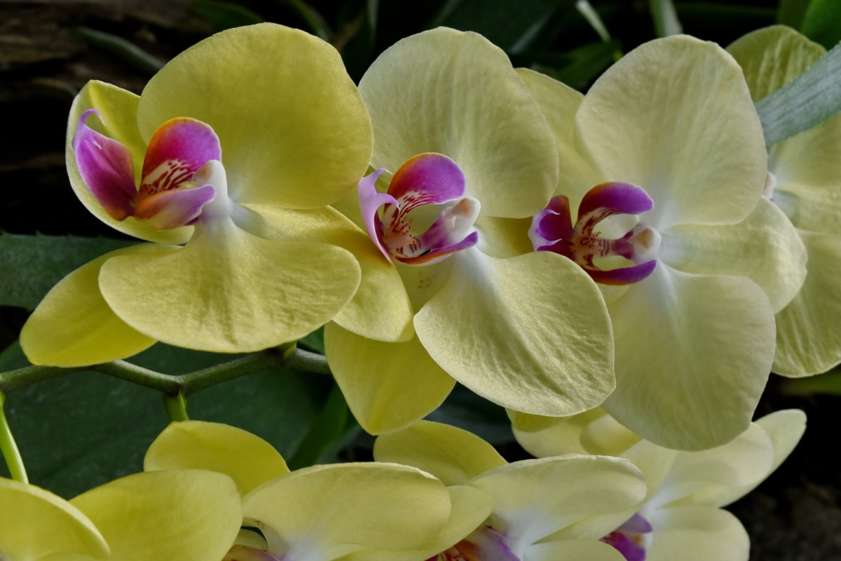 orchid, rain forest, petal, tropical, plant, flower, flora, bloom