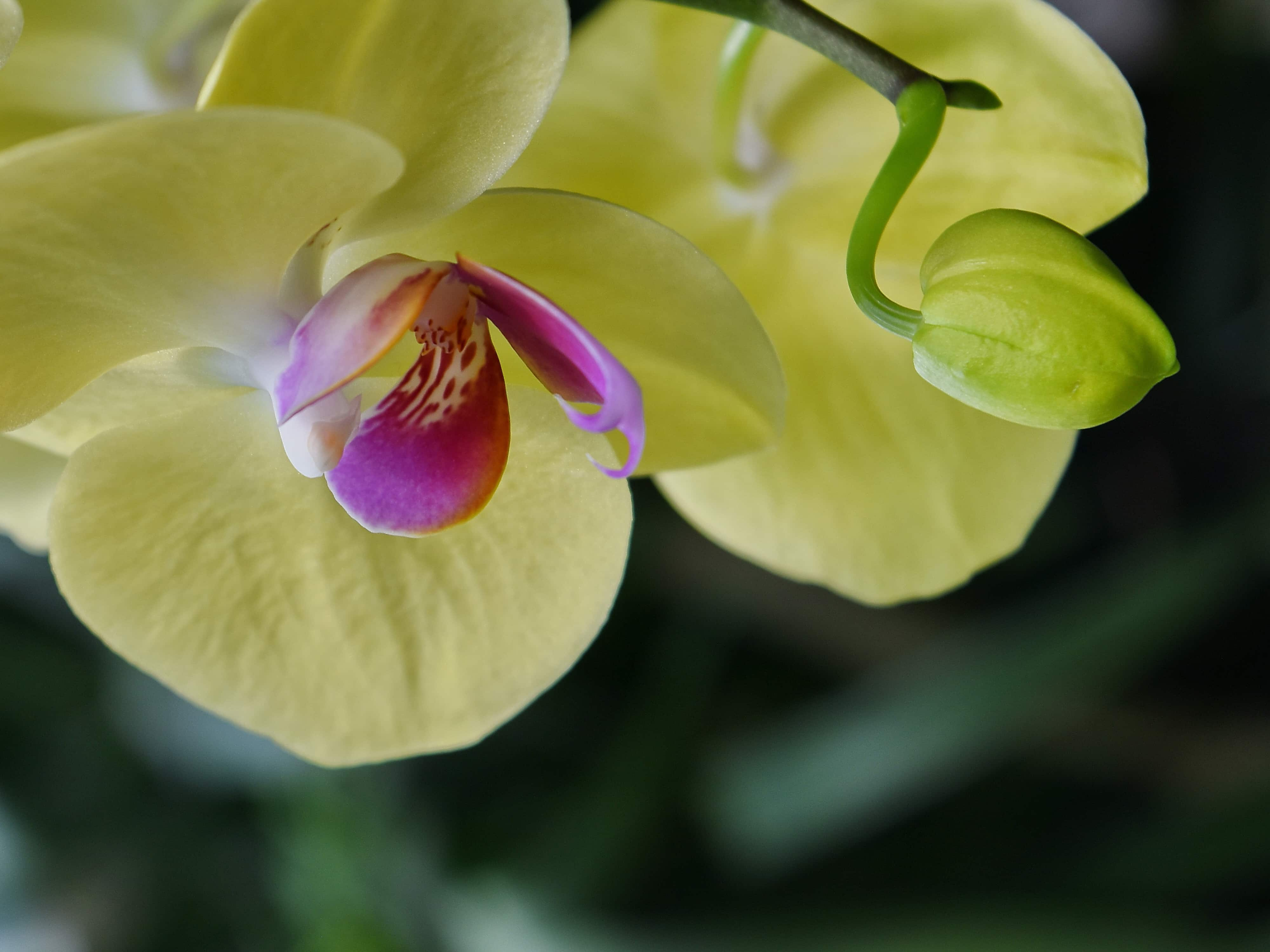 Free Picture Beautiful Flowers Exotic Flower Garden Orchid