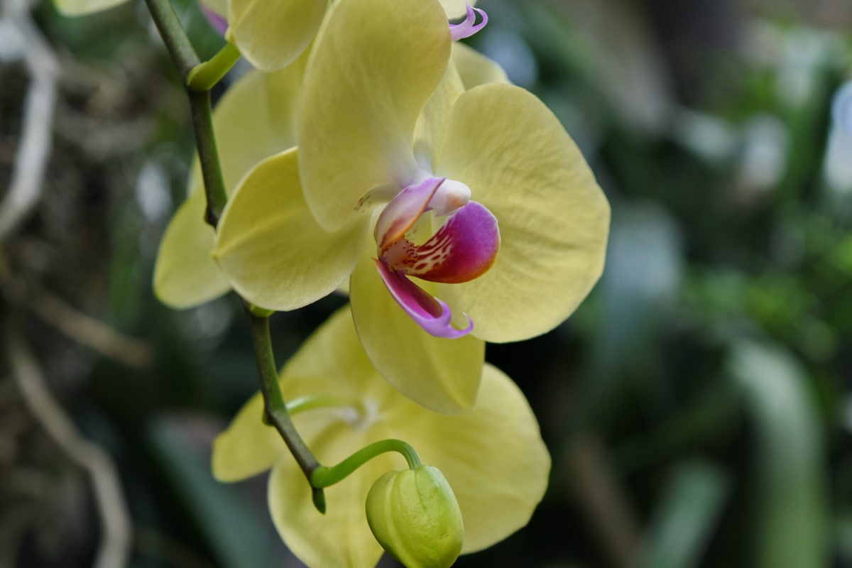 orchard, yellow, flower, garden, plant, nature, blossom, flora