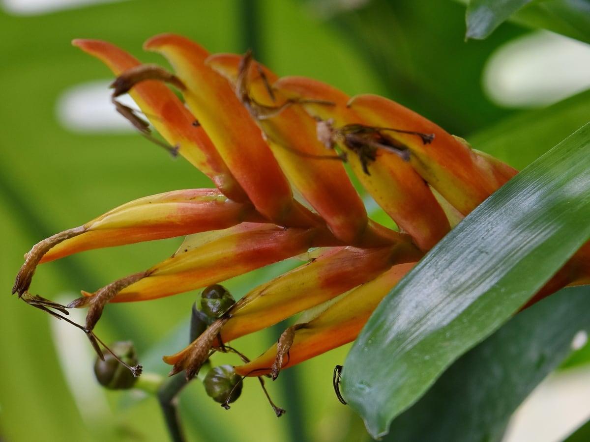 rastlín, príroda, krídlo, flóra, kvet, letné, Záhrada, vonku