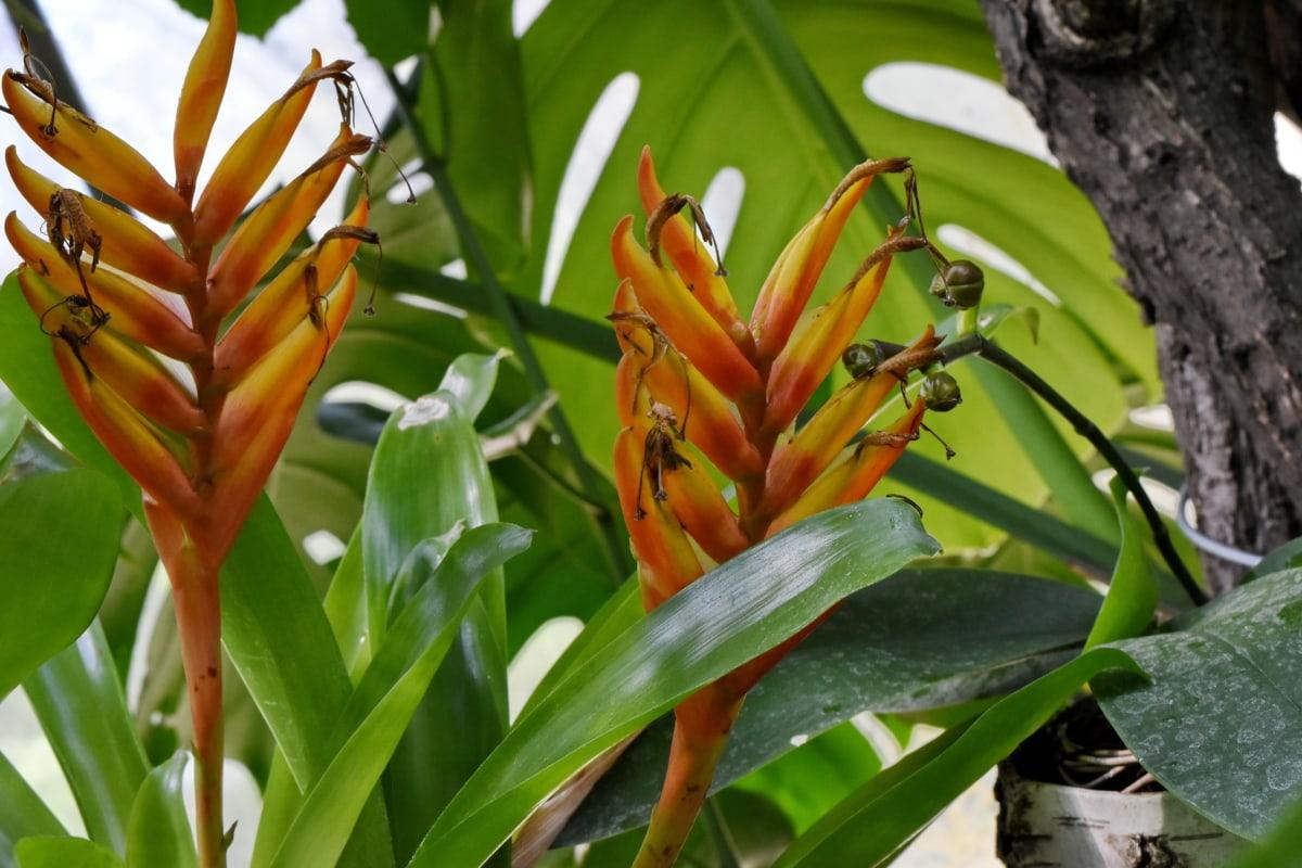 дъждовна гора, тропически, природата, листа, цвете, градина, лято, на открито