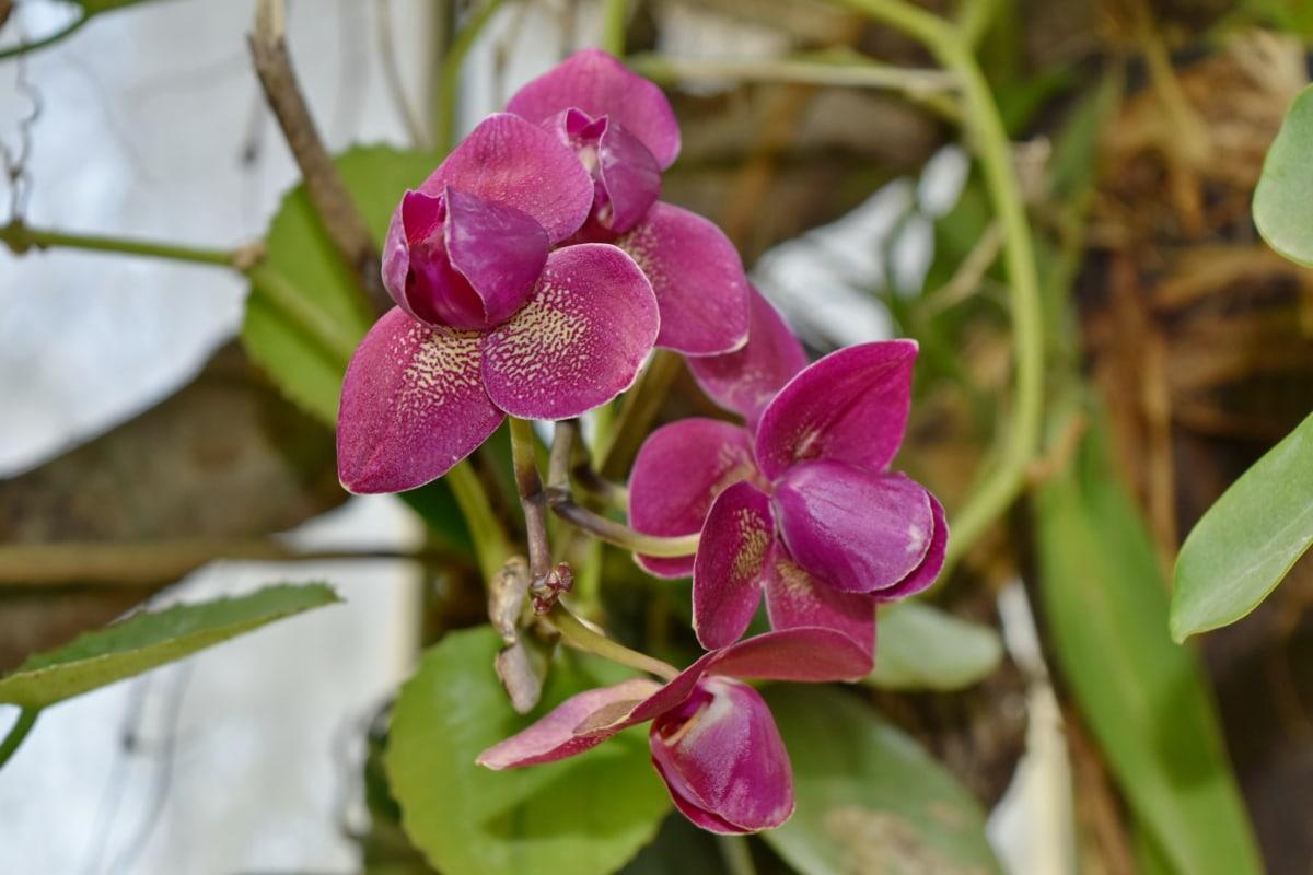 prekrasno cvijeće, egzotične, orhideja, ljubičasta, latica, flore, roza, priroda