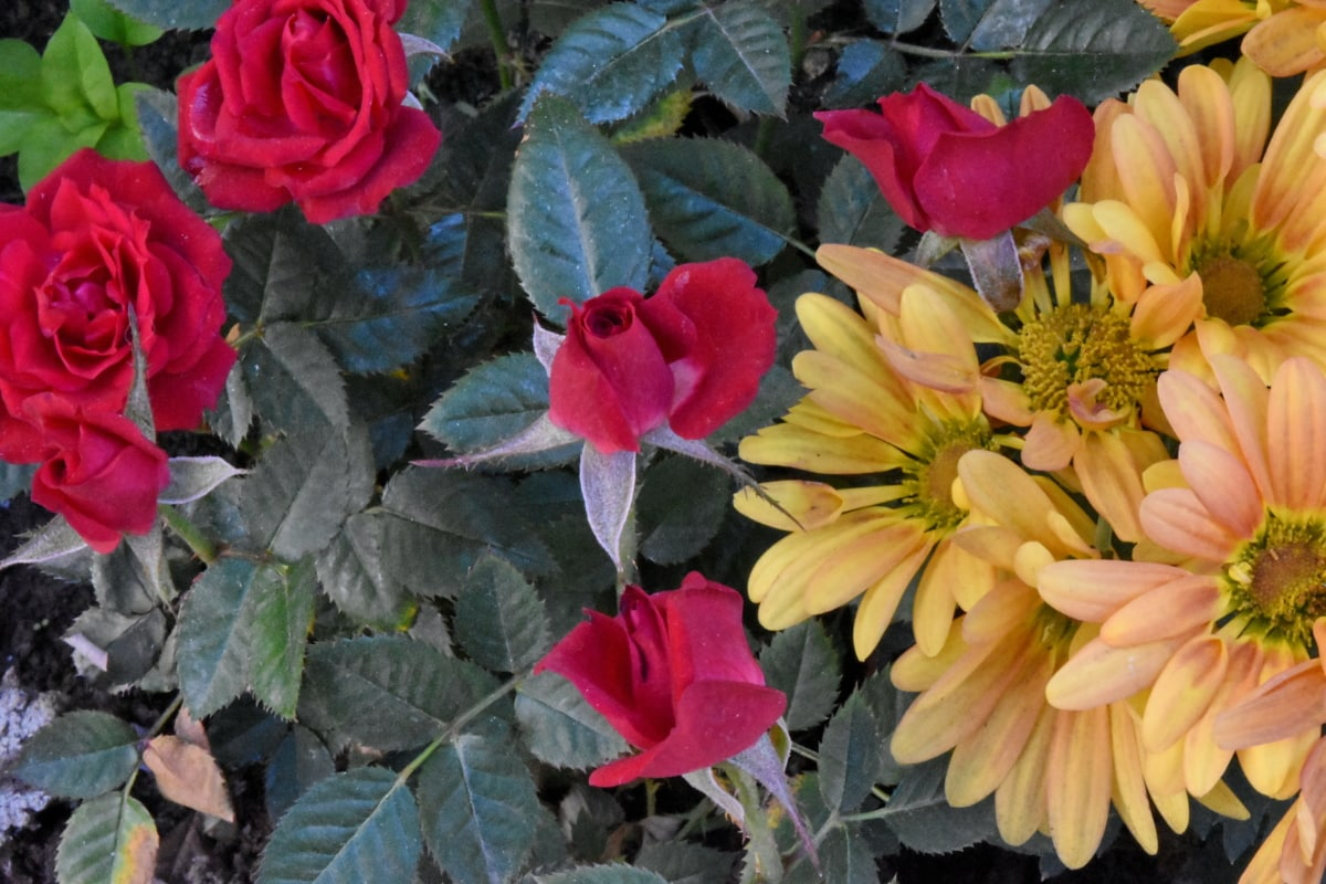 λουλούδια, χλωρίδα, μπουκέτο, φυτό, λουλούδι, φύση, φύλλο, Κήπος
