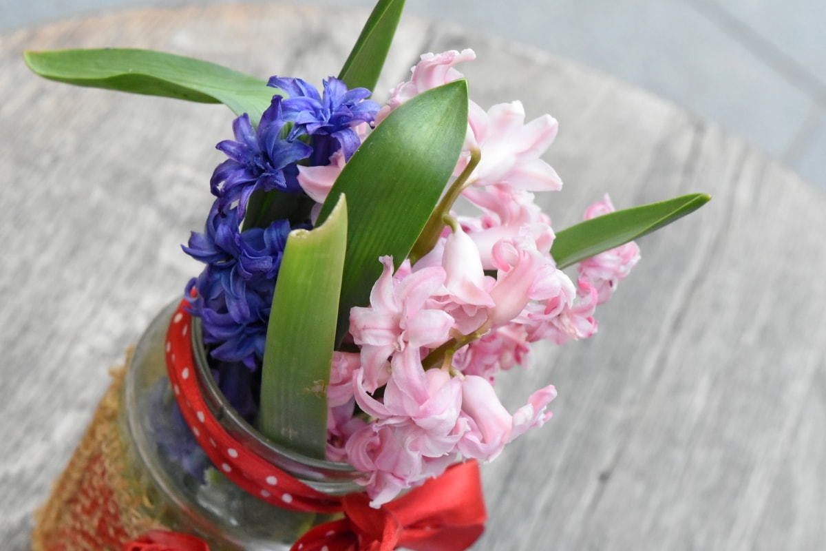 bouquet, jar, vase, hyacinth, flower, flowers, arrangement, plant