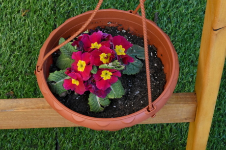 flowerpot, container, flower, garden, flowers, summer, leaf, nature