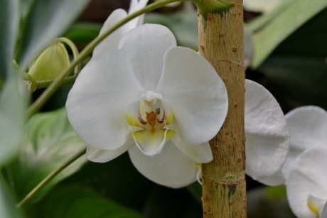 orchid, flower, spring, plant, blossom, nature, herb, tropical