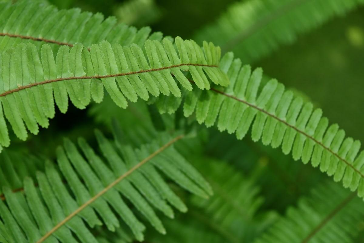 绿叶, 黄绿色, 蕨, 叶, 森林, 植物, 叶, 植物区系