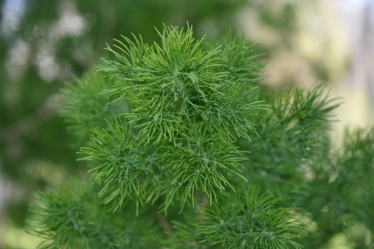 flora, planta, hierba, hoja, naturaleza, de cerca, rama, verano
