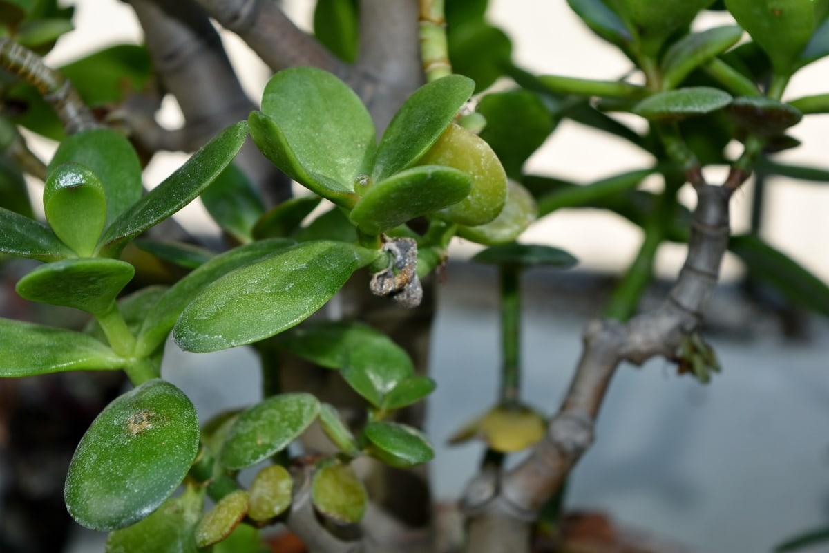 leaf, tree, nature, herb, flora, shrub, plant, garden