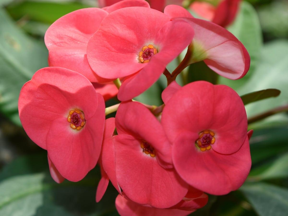 hermosas flores, Ecología, pétalos de, rosado, flor, planta, Jardín, Pétalo