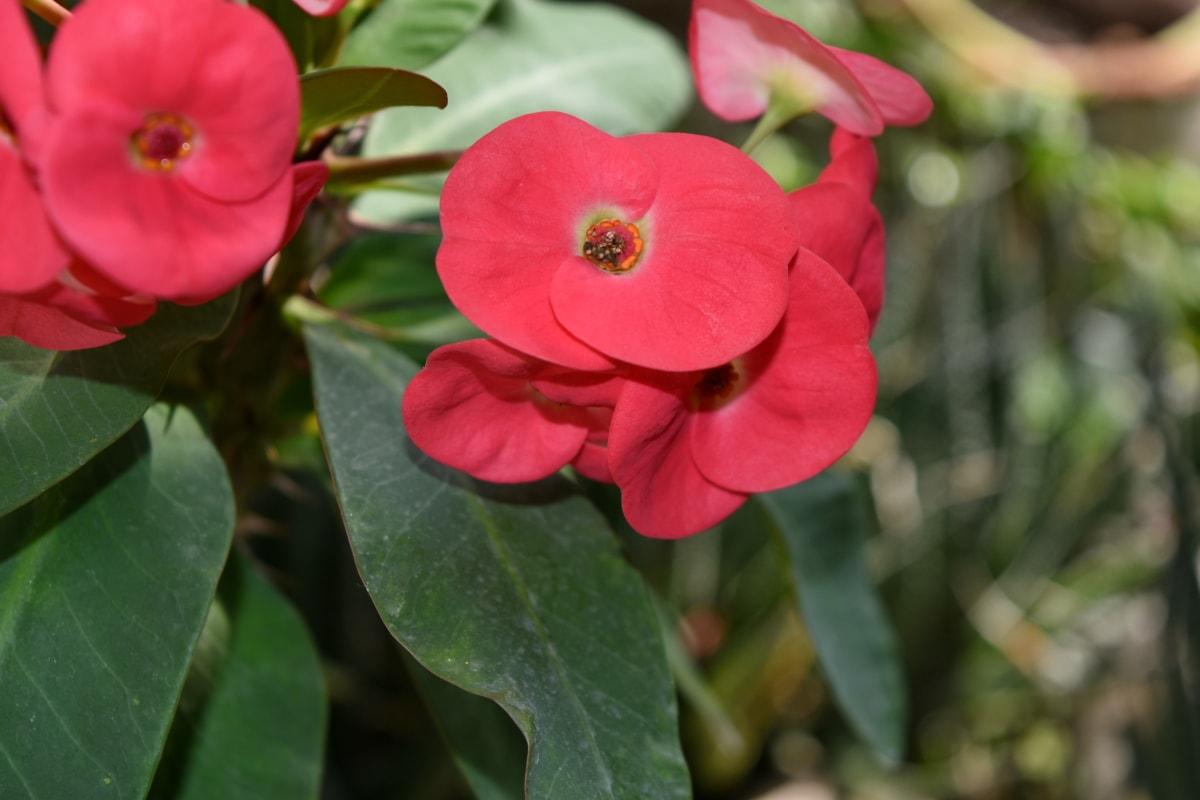 花瓣, 植物, 花, 性质, 植物区系, 花园, 叶, 盛开