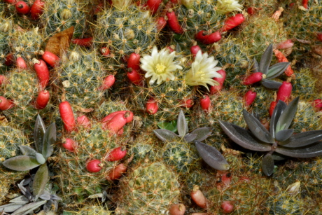 flower garden, nature, cactus, flora, decoration, succulent, desert, leaf