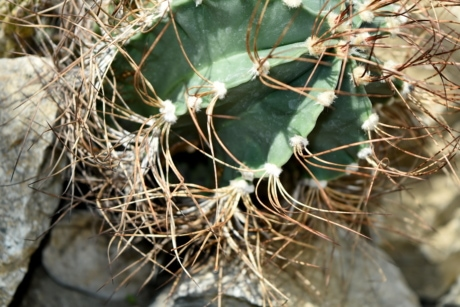 botanic, desert plant, detail, sharp, spike, cactus, nature, plant