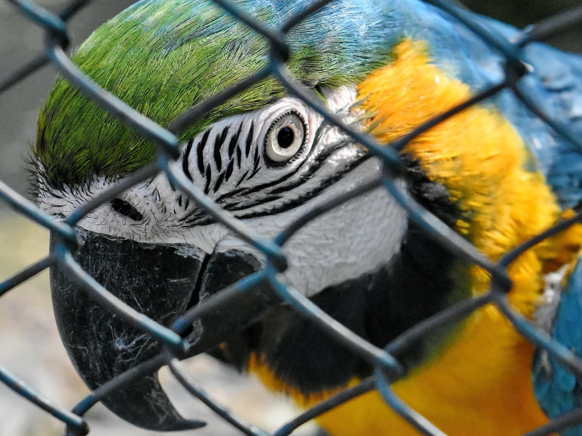 wildlife, parrot, animal, bird, beak, feather, macaw, cage
