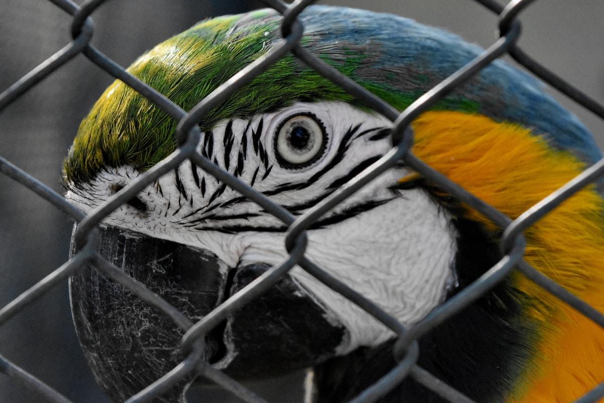 zviera, papagáj, papagáj, vták, voľne žijúcich živočíchov, klietka, vonku, plot