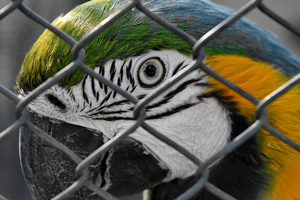 bird, equine, macaw, wildlife, barrier, nature, outdoors, cage