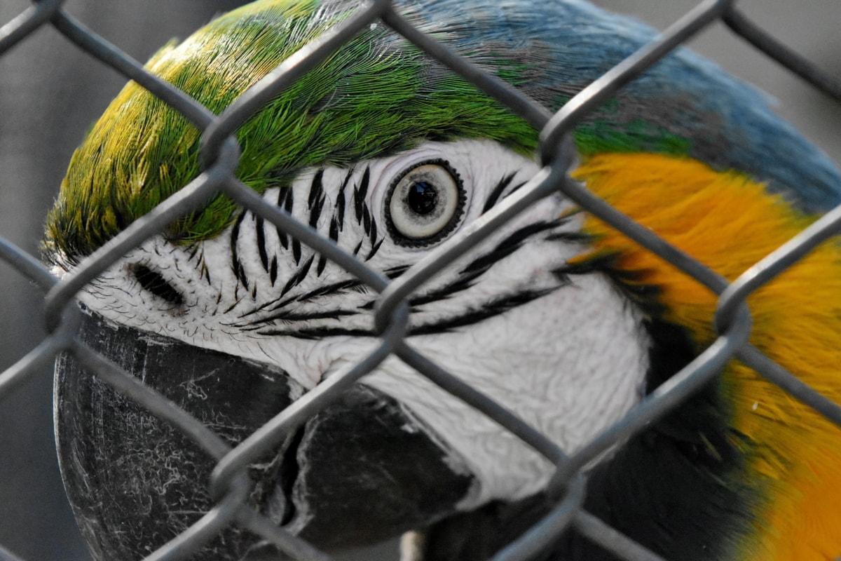 πουλί, ιπποειδών, μακώ, άγρια φύση, φράγμα, φύση, σε εξωτερικούς χώρους, κλουβί