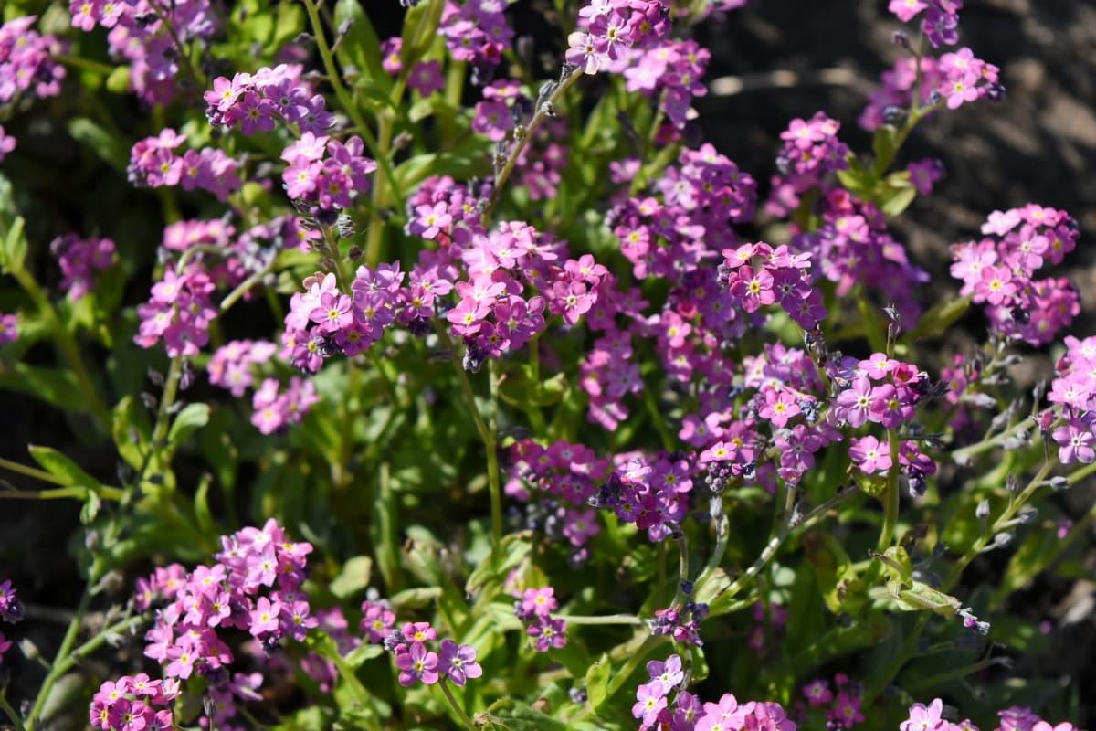 naturaleza, planta, Jardín, verano, flor, hierba, flores, flora