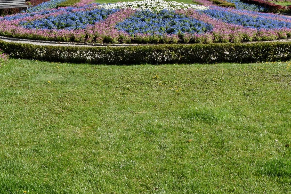 landscape, field, plant, flower, grass, lawn, nature, flora