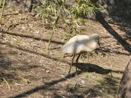 wading bird, nature, bird, wildlife, aquatic bird, animal, outdoors, wild